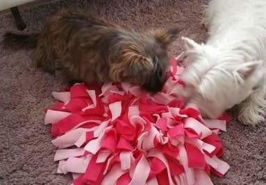 Snuffelmatten voor honden